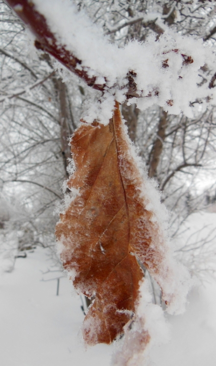 this leaf was clinging