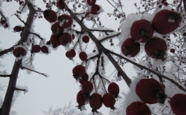 ...with her Ruby Berries.