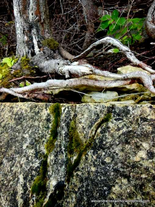 1-rock-roots-along-the-edge