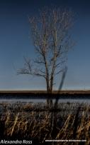 1-Tree (1 of 1)-2