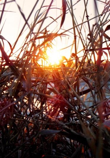 Grass1_edited-1