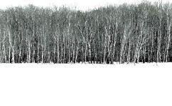Trees_edited-1