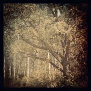 mytical tree