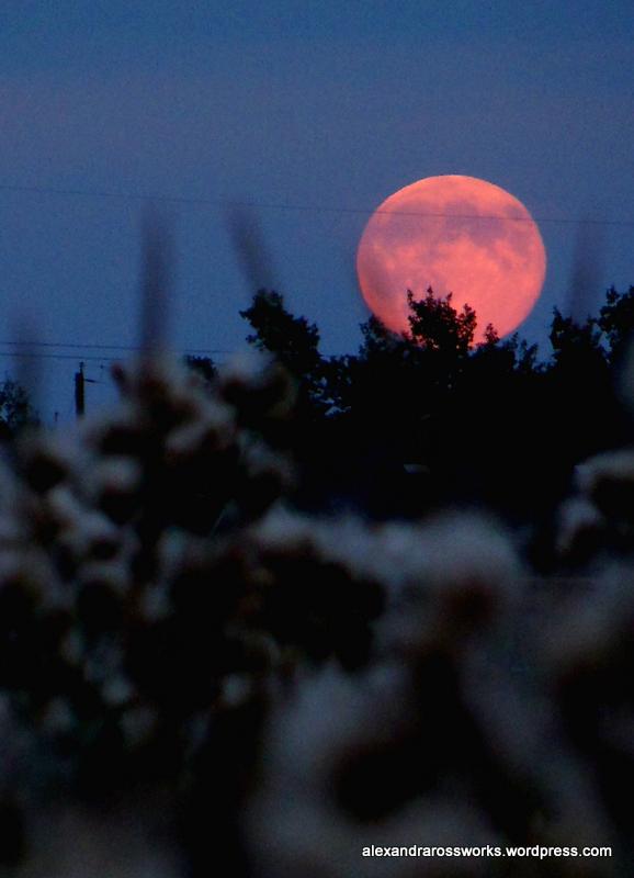 1-super moon 1