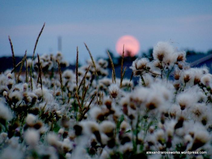 1-super moon 2