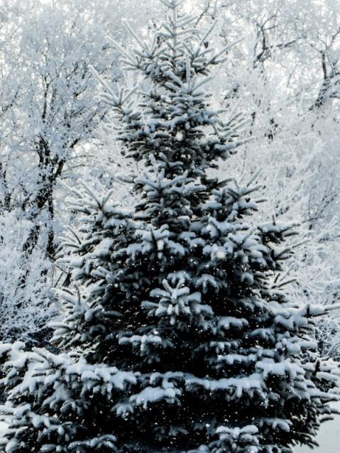 1-Christmas (2 of 3)-001