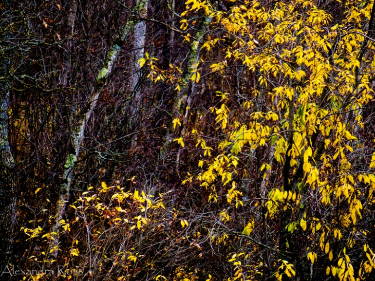 1-Fall Colours (1 of 1)-4