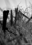 1-Fence-7