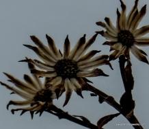 1-Small flower-003
