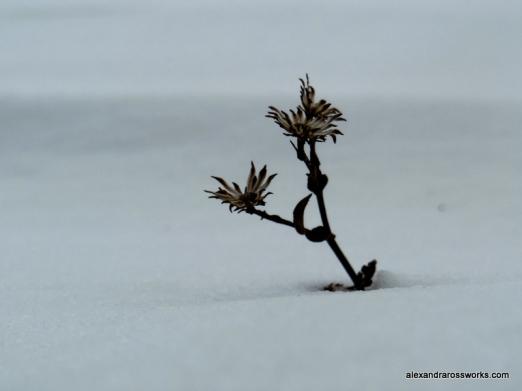 1-Small flower-004