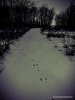 1-Snow Path-2