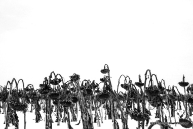 Exhibit 2015 The Vanishing Grasslands